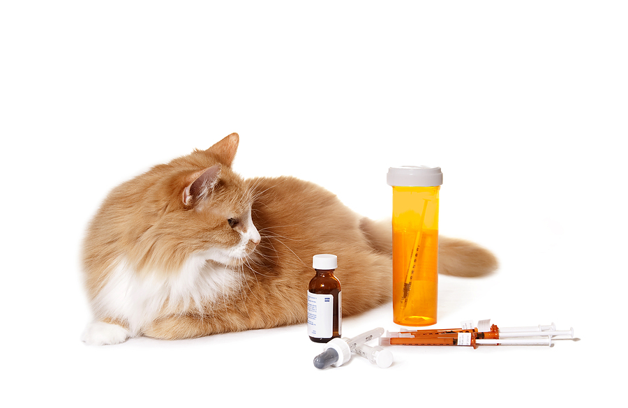 bigstock_Cat_Looking_at_Medication_10964603